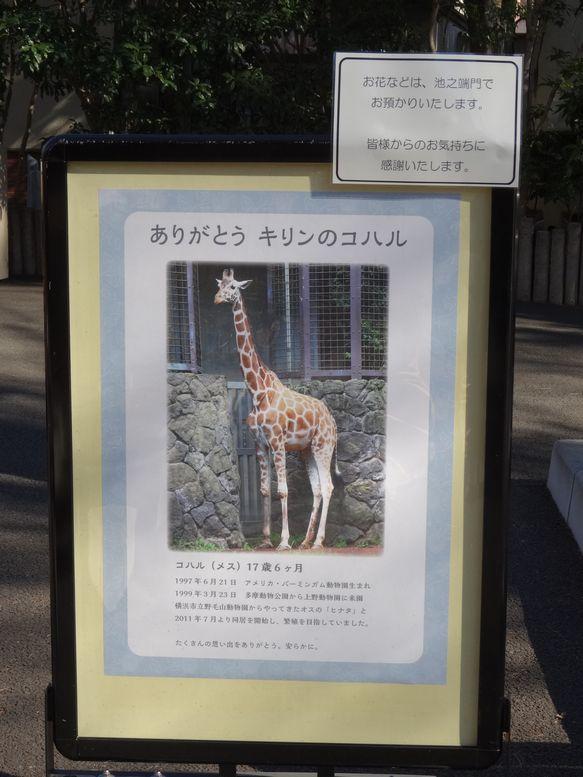 ThanksKoharu.jpg